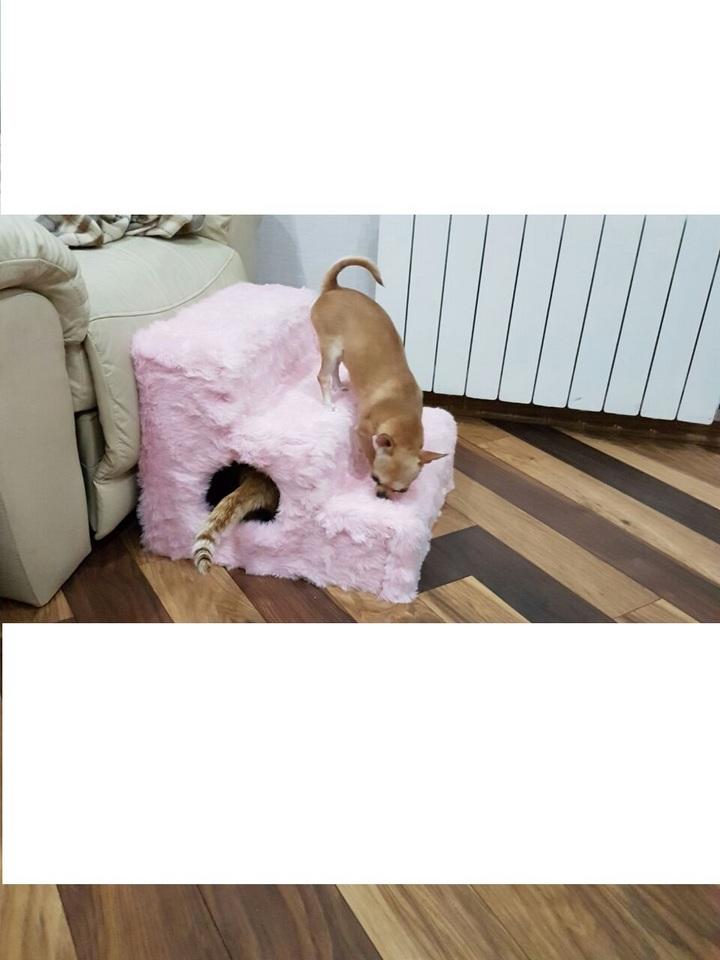 Bedside steps for small dog breeds