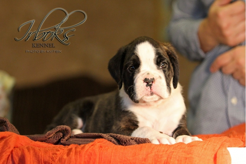 Puppies with excellent pedigree