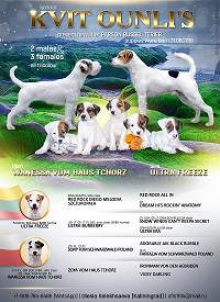 The parson Russell Terrier puppy from a breeding kennel