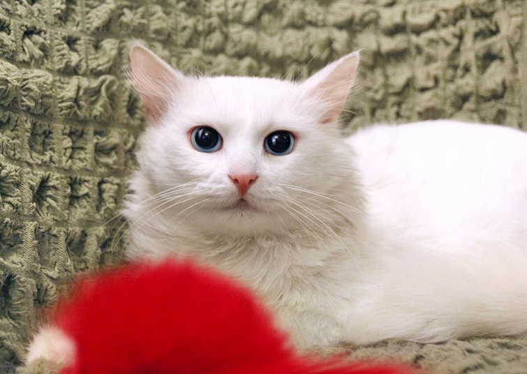 Blue eyed handsome man looking for reliable owners
