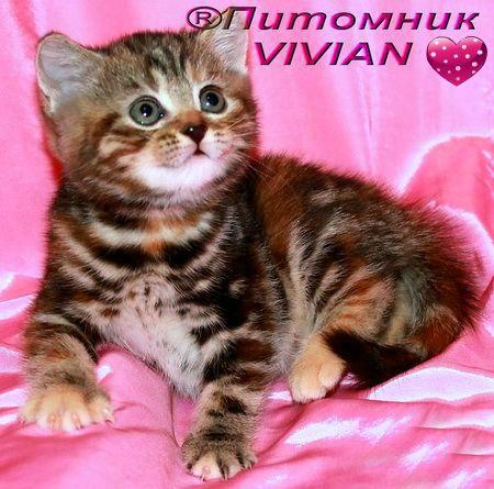 Stroy-catnarodru