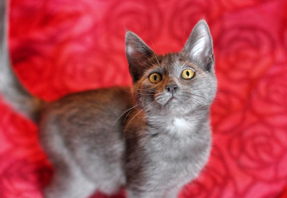 Beauty kitten Anita the gift of good people