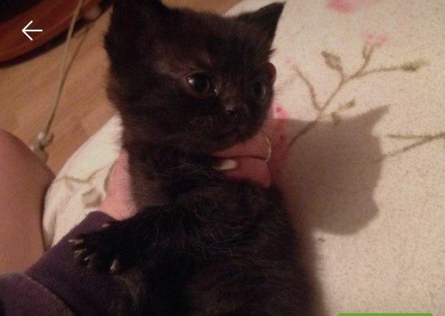Sell a kitten