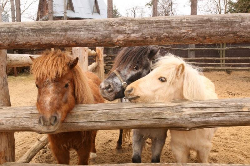 Ponies selling ponies
