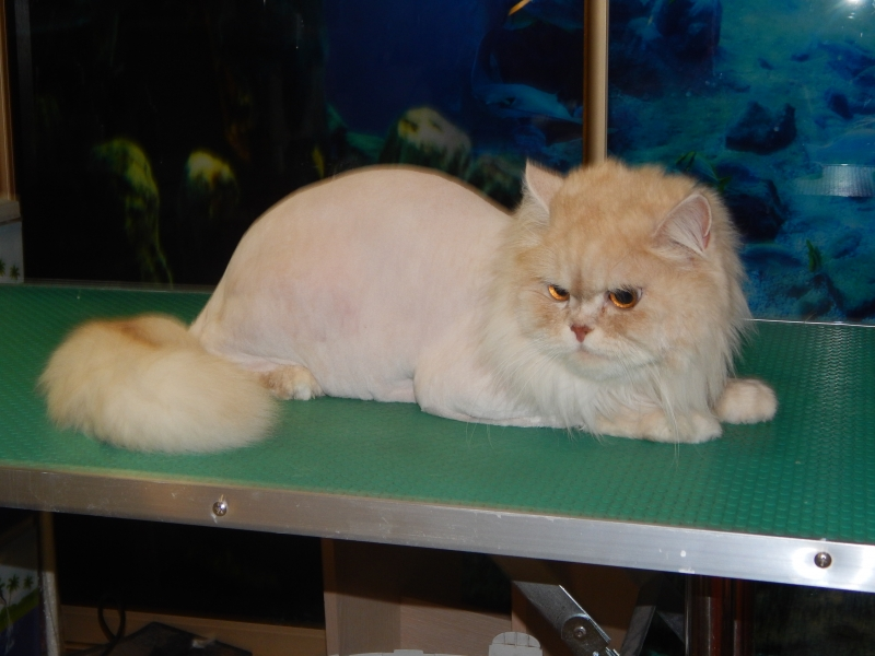 Grooming dogs and cats