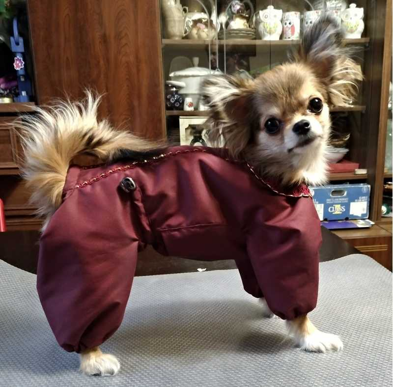 Sew clothes for dogs