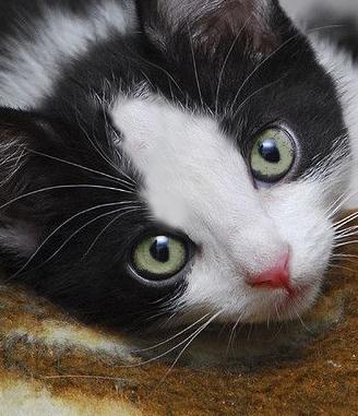 Kitty girl the affectionate of dvuhsvetno.in good hands