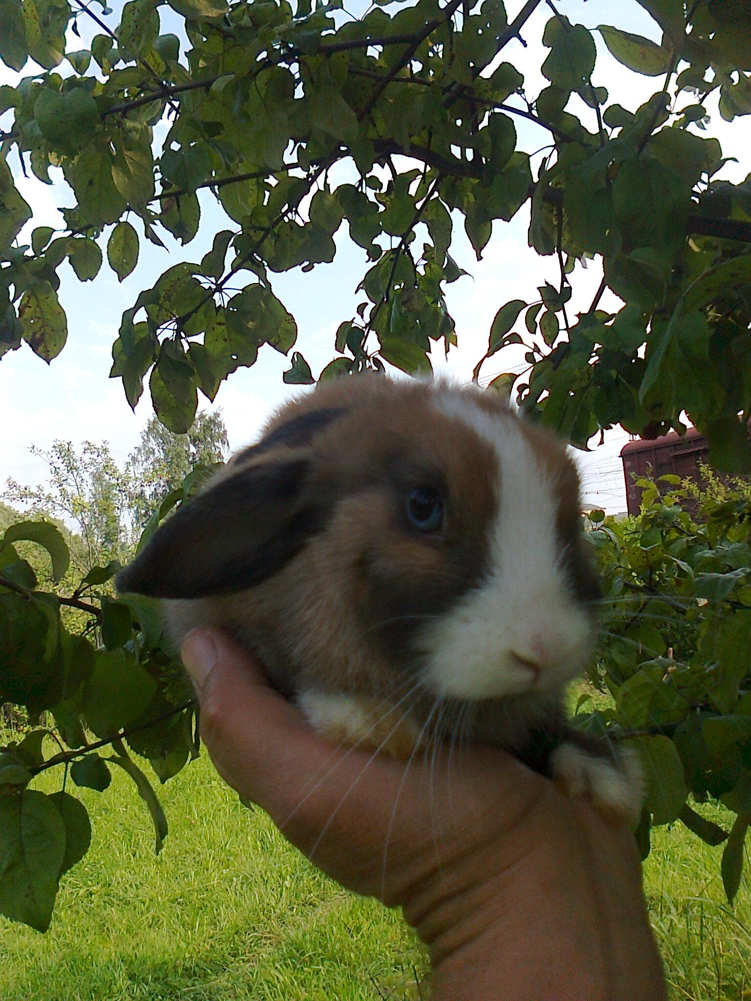 a dwarf rabbit. shipping. Johnny