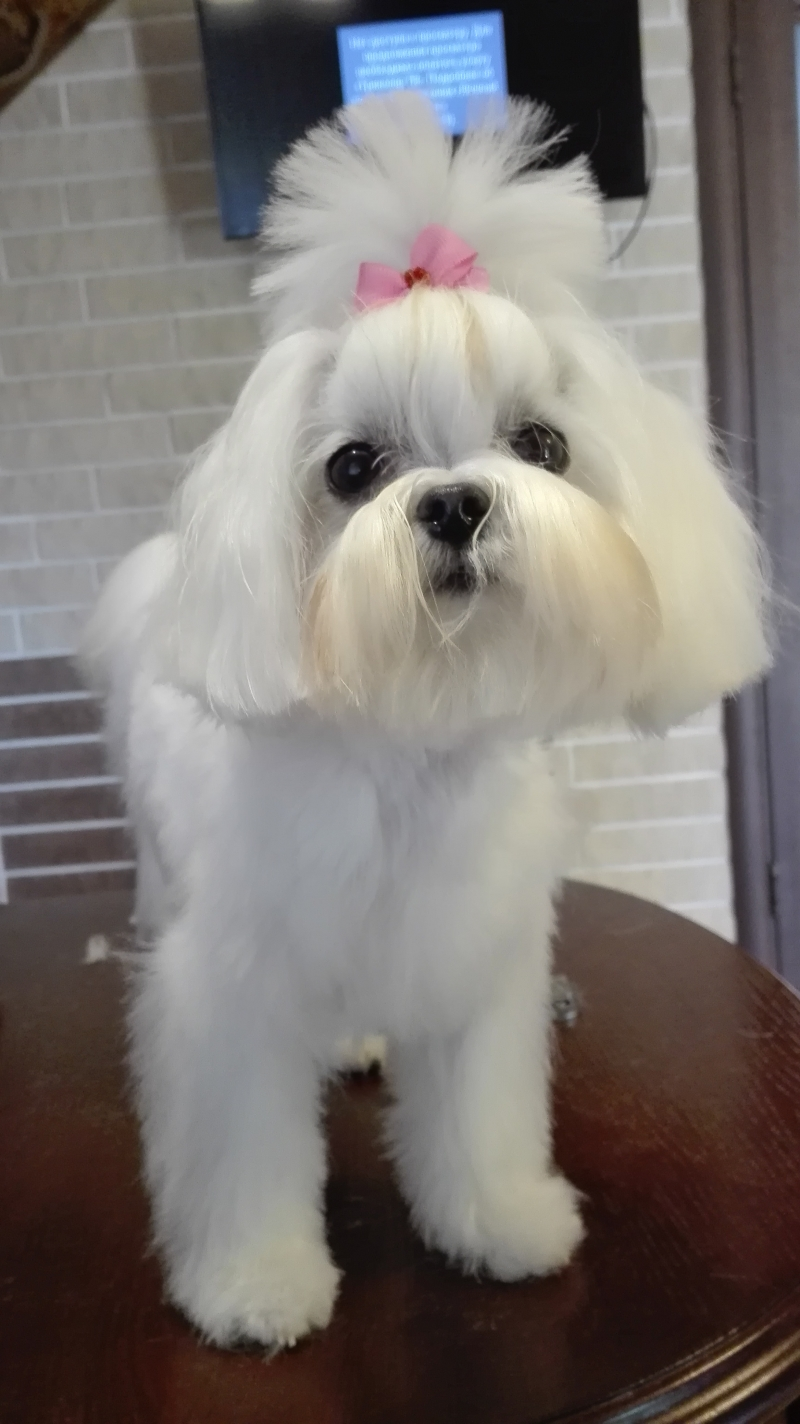 Grooming cats and dogs (trimming)