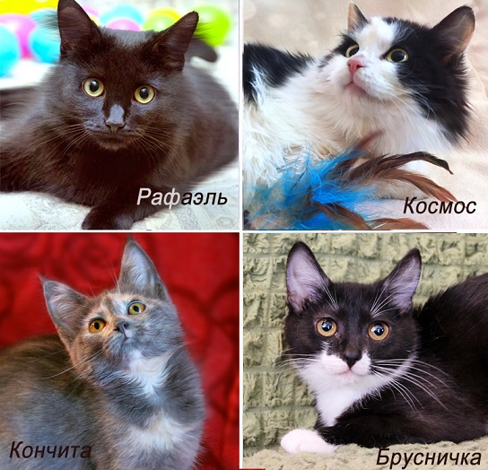 Kittens from the shelter of all kinds. Furry children need a home