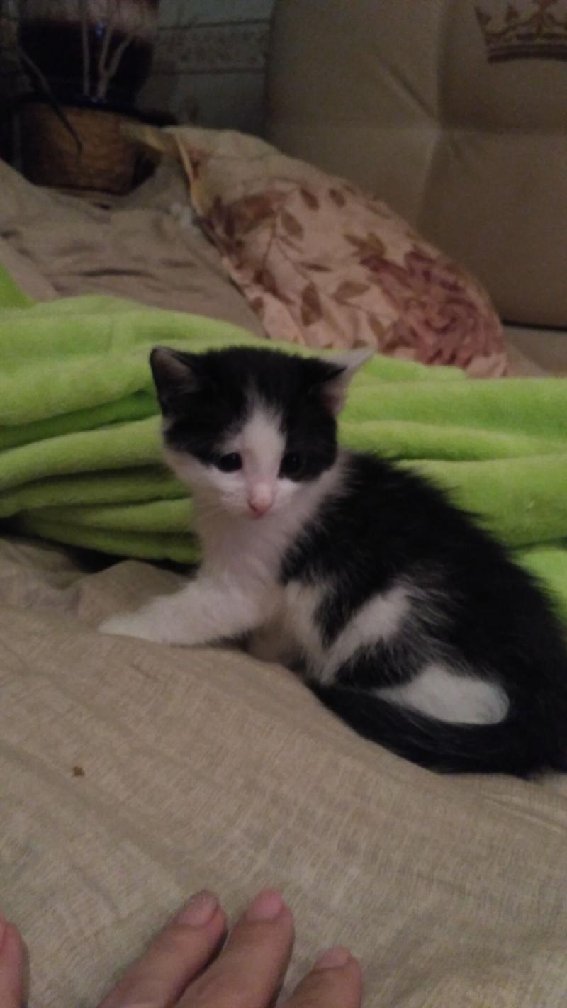 Kitten.in good hands