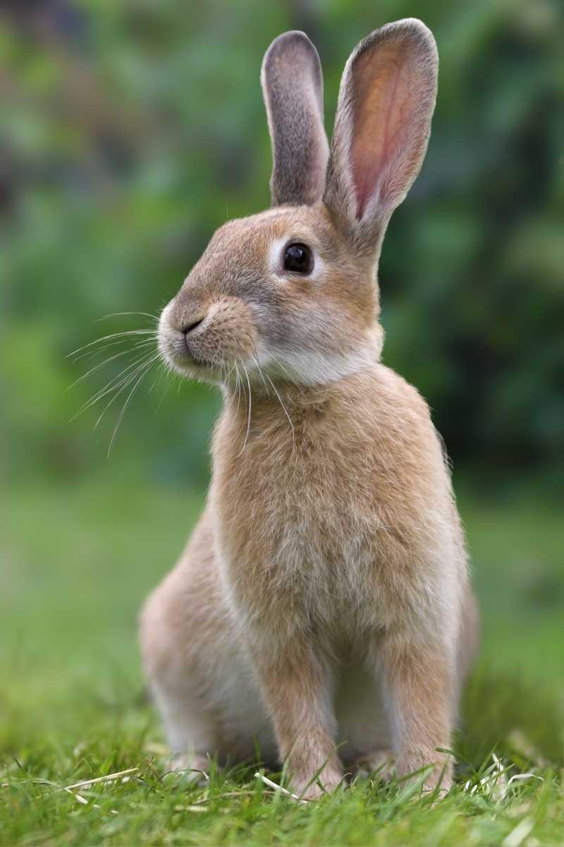 Buy rabbits