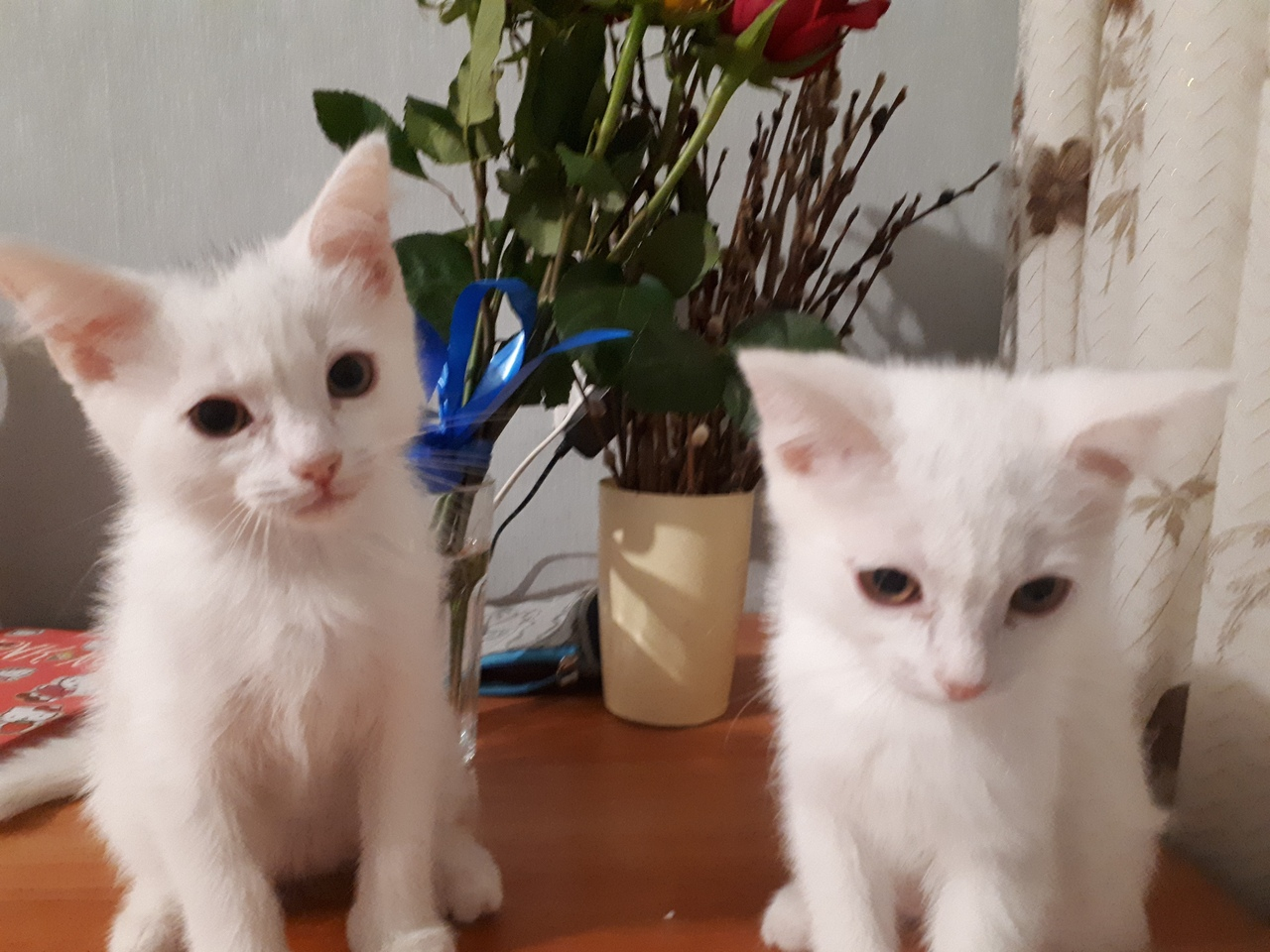 Will give kittens to gift