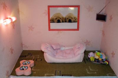 Гостиница для животных собак и кошек