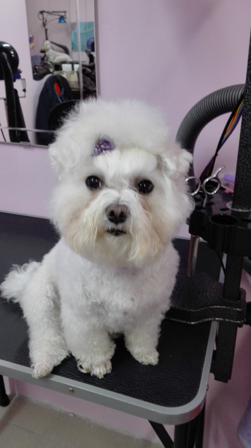 Grooming cats and dogs