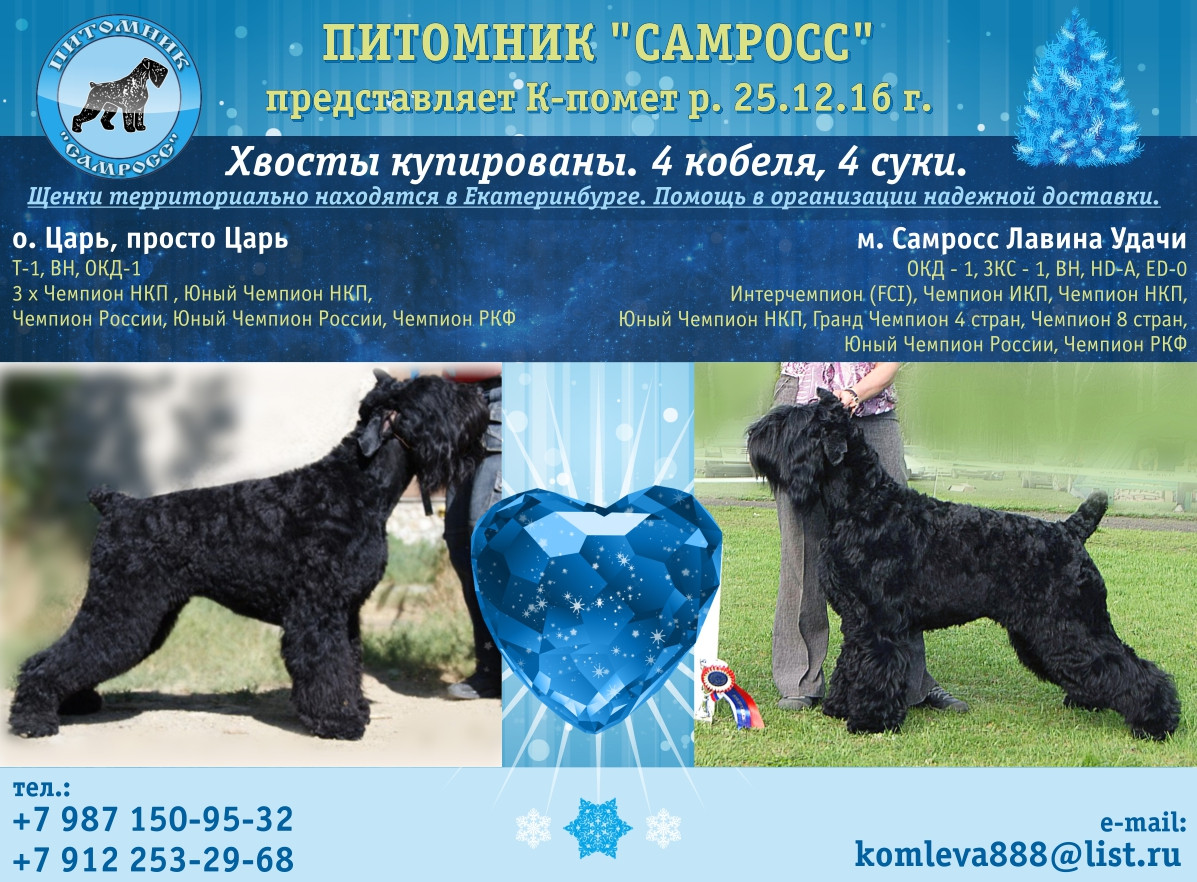 Puppies Black Russian Terrier from Champions