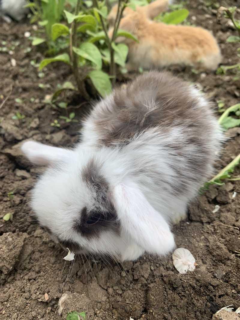 Fold decorative rabbits