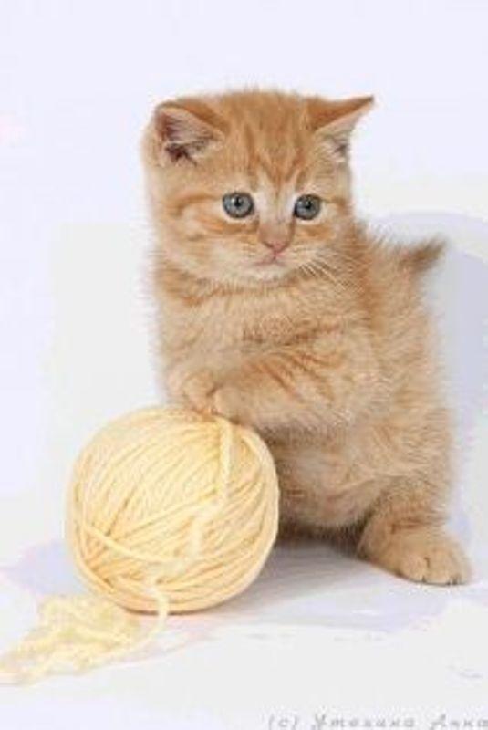 club red kittens
