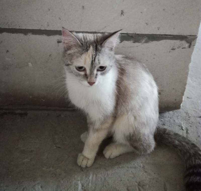 Charming kitten urgently needs a home
