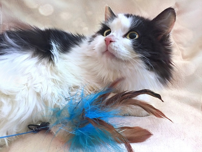 Fluffy kitten star Cosmos looking for a home