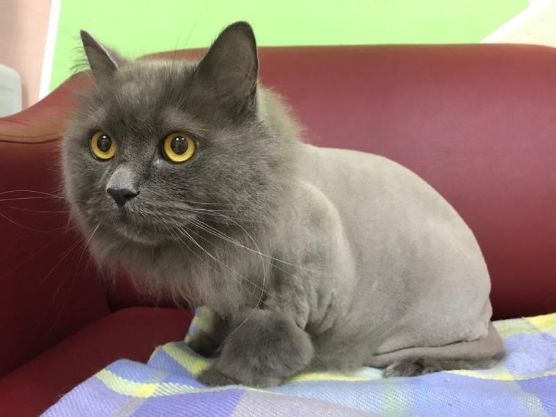 Haircut, wash, pet care