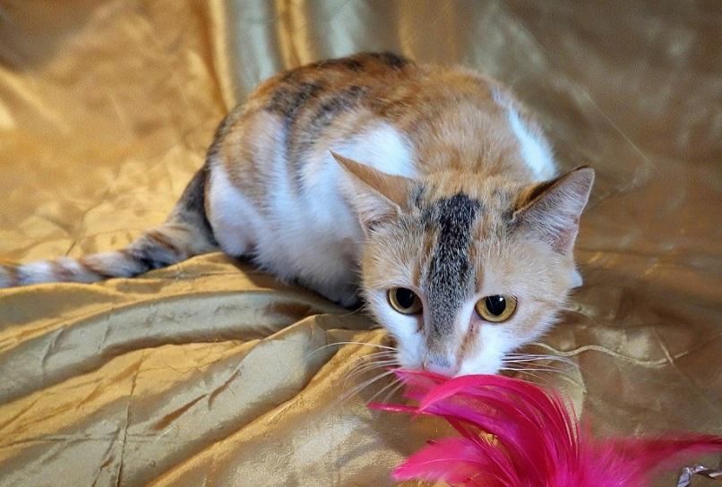 Kitten Gloria - a flight of fancy for a gift!