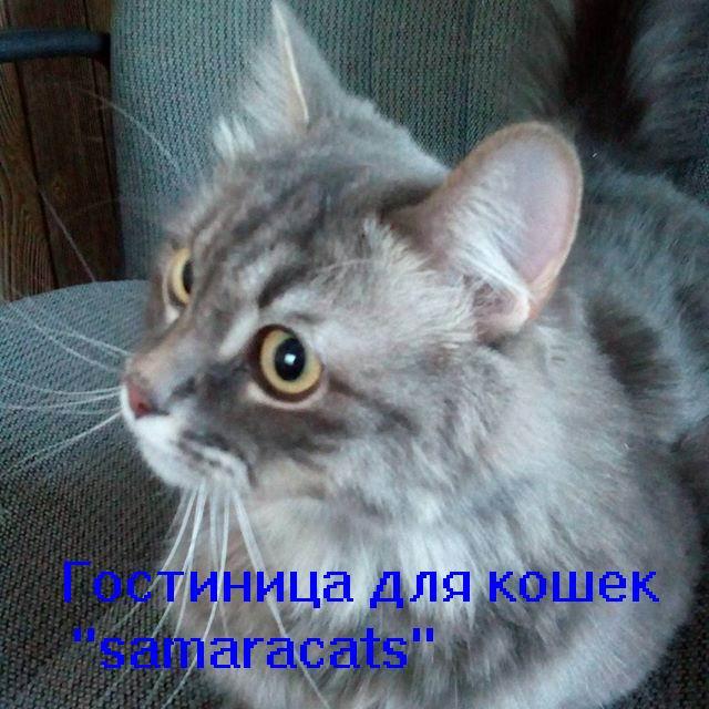 """Hotel for cats """"samaracats"""""""