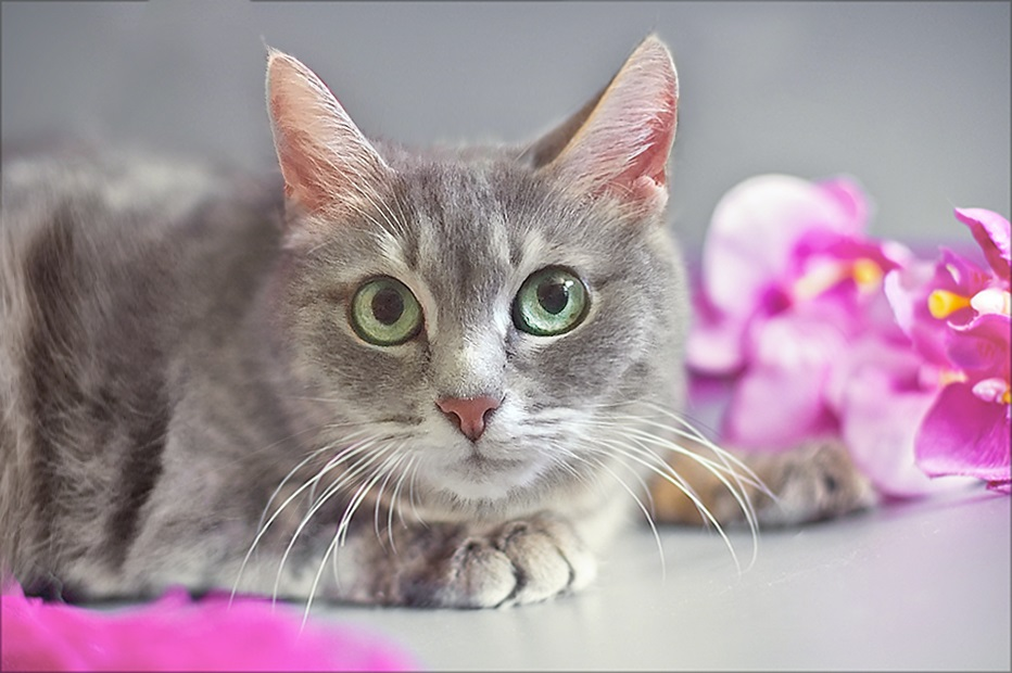 Phoebe - silver beauty looking for a home
