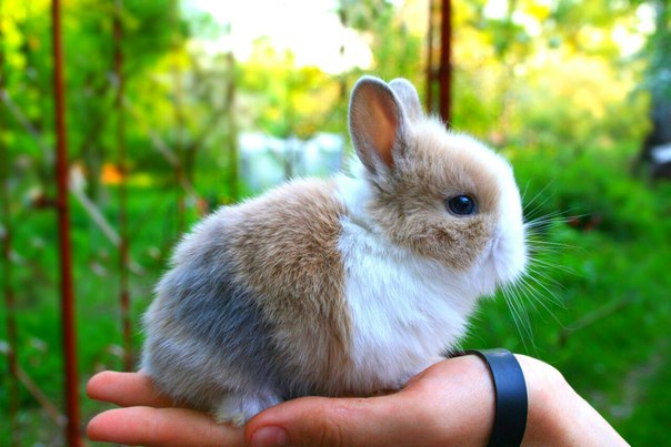 Kennel dwarf rabbits uwawa