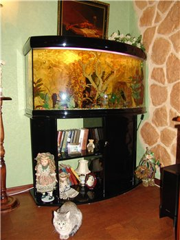 Sale Aquarium