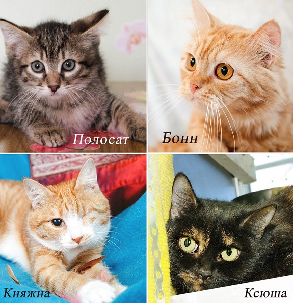 Kittens from the shelter of all kinds. All the hairy-taile.in need of a home
