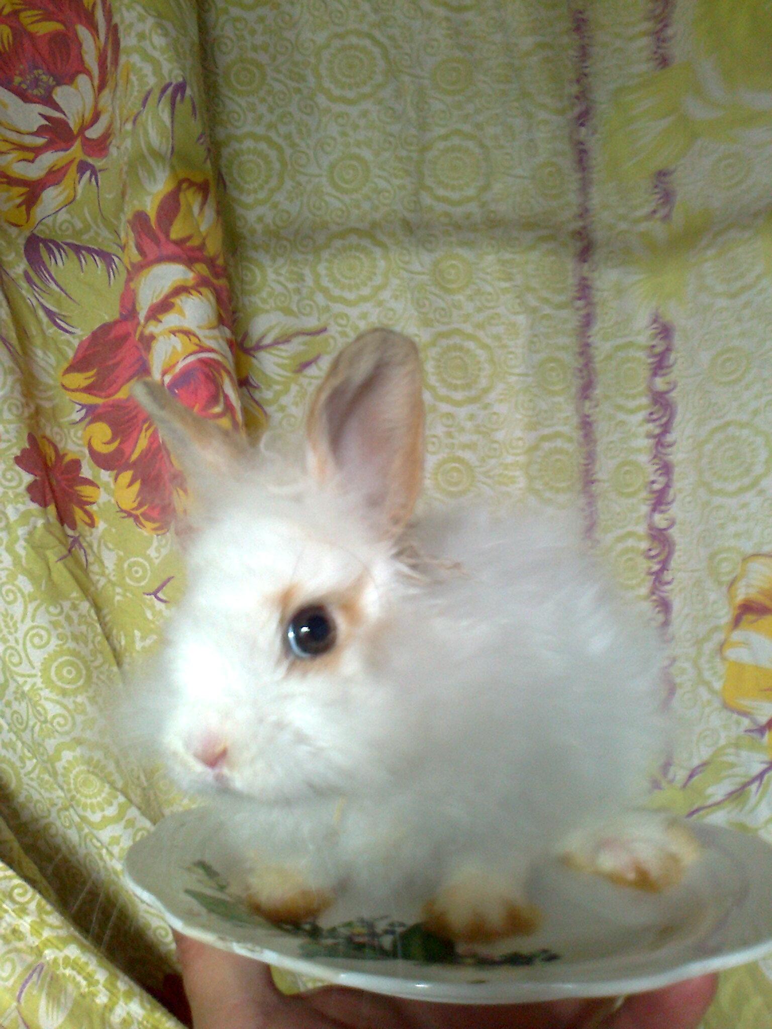 a dwarf rabbit. shipping. Arnie