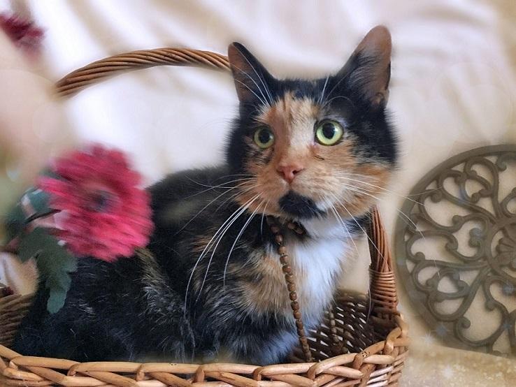 Kitty Marfushechka-darling for a gift