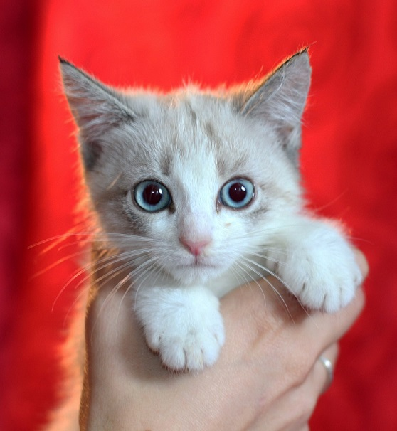 Adorable kitty Candy looking for a home!